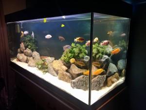 Malawi Aquarium