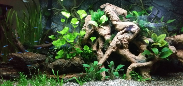 natuurlijk biotoop aquarium