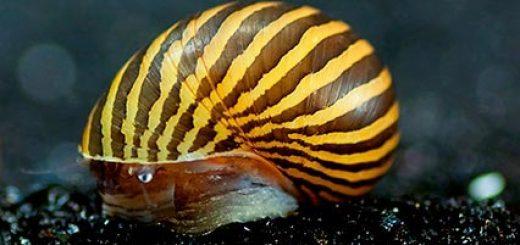 Slakken in het aquarium